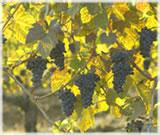 オレゴンワインイメージ写真