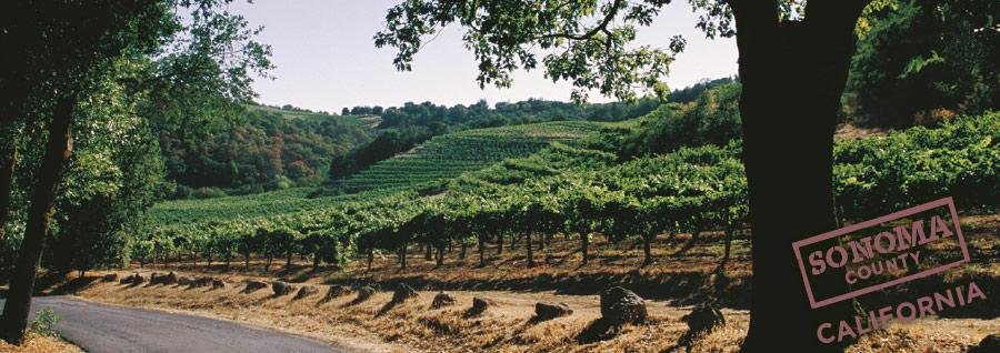 ソノマワイン 産地風景