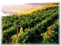 ワシントンワイン畑イメージ