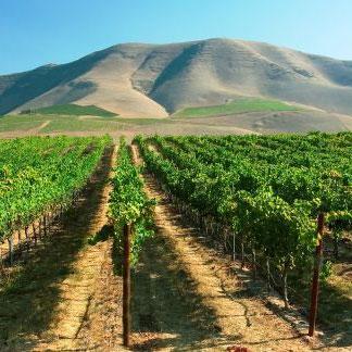 オーボンクリマの主要なブドウ畑